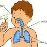 r3 150x150 - Respiratorio infantil