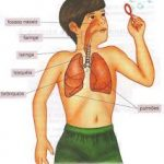 r4 150x150 - Respiratorio infantil